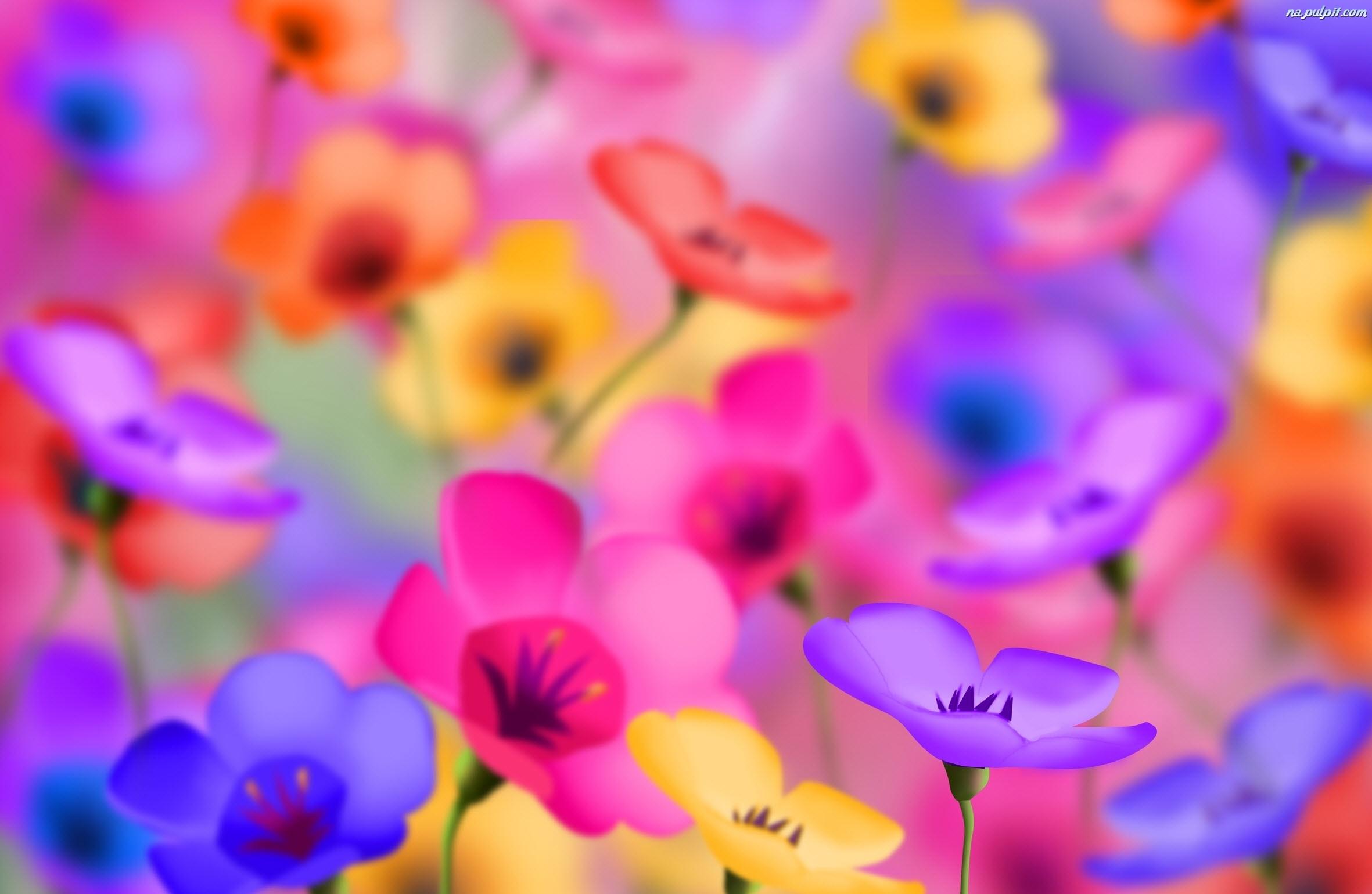 Tło kwiaty kolorowe rozmyte